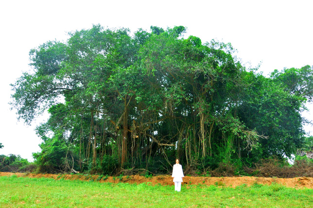 Banyan Tree at Our Ashram in South India