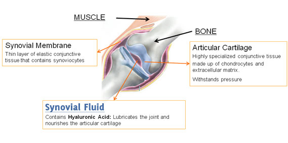 joints and hyaluronic acid
