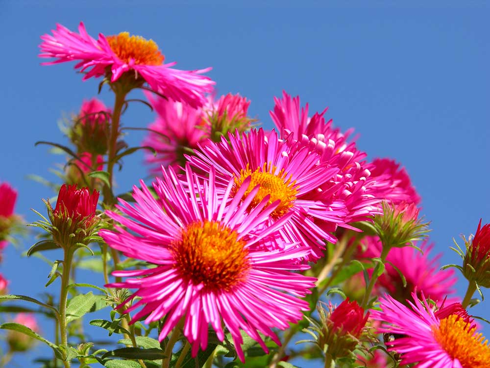 Losinj-Flower2